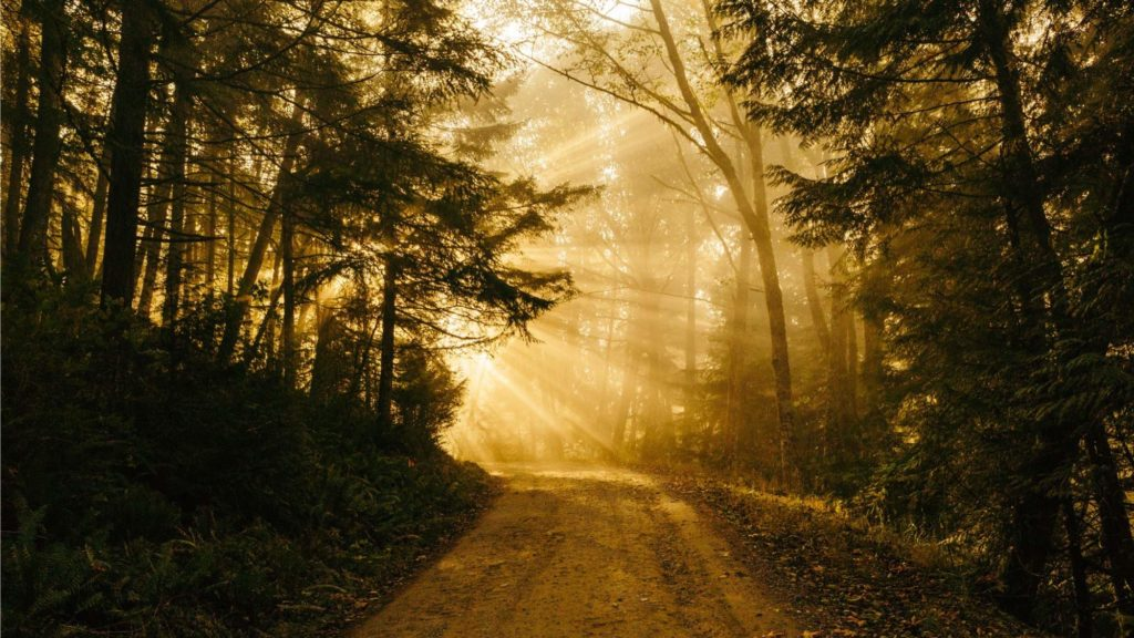 Sunny path Photo by Patrick Fore Unsplash